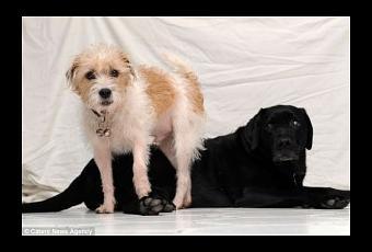 Dog Bring Toys To Sad Owner