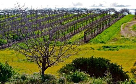 Barossa Valley Wineries 5 Barossa Valley Wineries You Don't Want to Miss