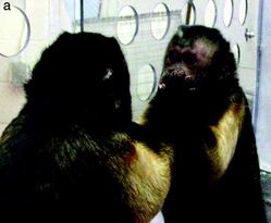 flirtycapuchin