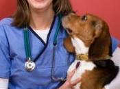Find Veterinarian Trust With Your Furry Family Members