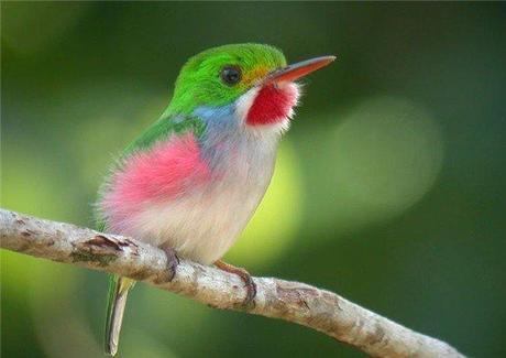 Bee hummingbird flying - photo#26