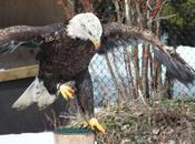 Mountsberg Raptor Centre World Hawks, Owls, Eagles, Vultures Falcons