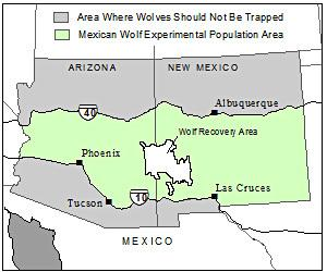 Mexican_gray_wolf_lawsuit