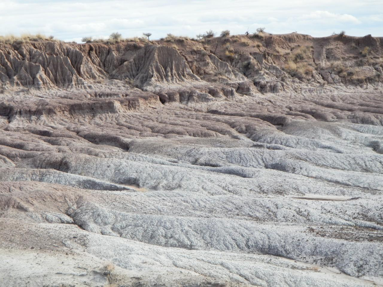 Petrified Forest Badlands