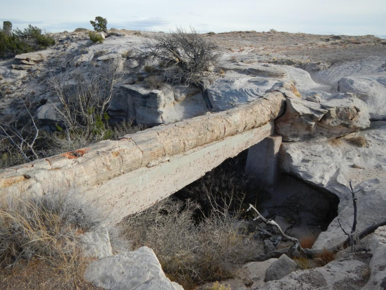 Wooden Bridge in the Petrified Forest