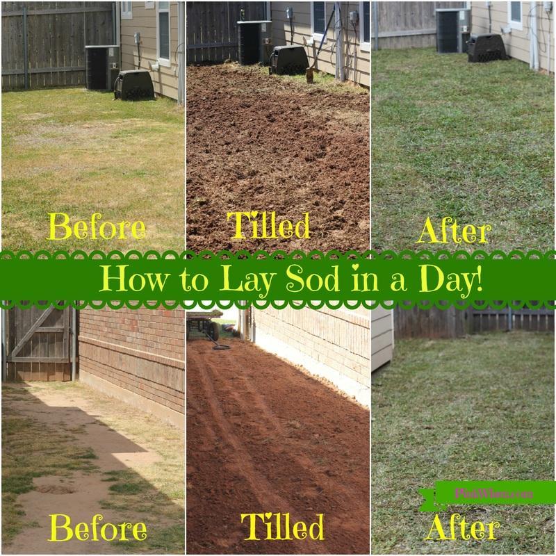 beautiful lay sod Part - 1: beautiful lay sod idea