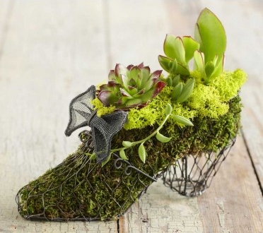succulent moss shoe