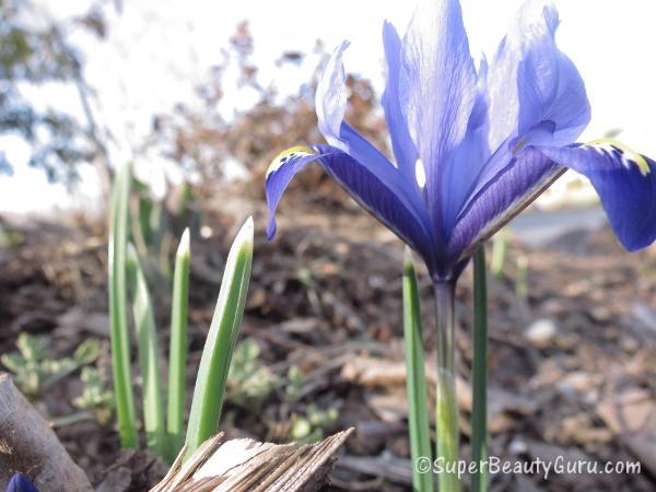 Macro Photo Flower