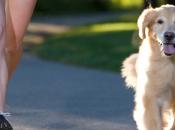 Dogs: Man's Best Fitness Friends