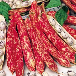 Ornamental Edible Exotics