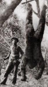 Photoshopped fake of an old photo showing a hunter with a dead Bigfoot.