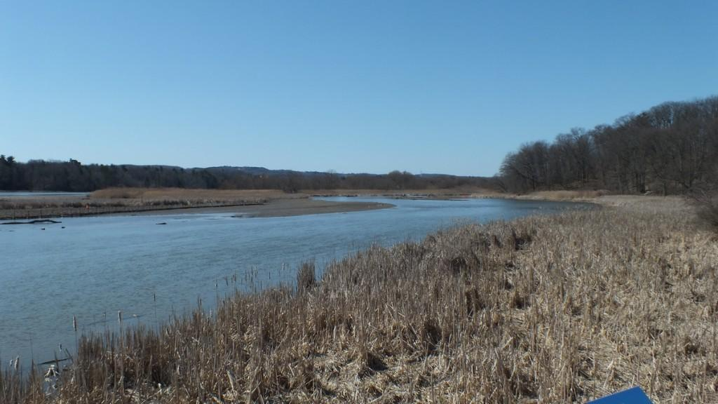 Cootes Paradise Marsh - looking towards trees with nest - Hamilton - Ontario