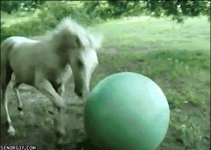 Horse-Exercise-Ball-Fail