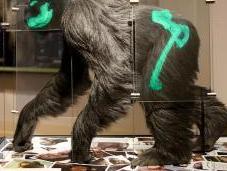 Lucy Knuckle Walker? Answers Genesis EvoAnth