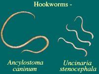 Types of Dog Worms