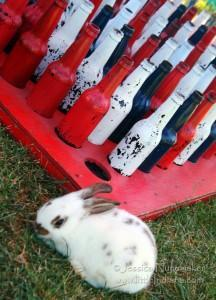 Earl Park Fall Festival: Ever Wanted to Win a Bunny?