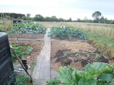 Looking down the plot from the fruit beds