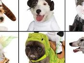 DOGS Dressed Star Wars Costumes Year 'Round!