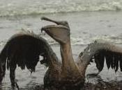 Florida Sues Third Anniversary Gulf Spill
