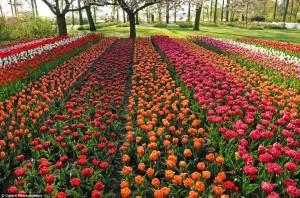 The world's largest garden with over seven million flowers