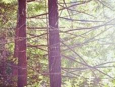 Finding Inspiration Among Redwoods