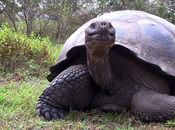 Giant Galapagos Tortoise! Extreme Close RUN!