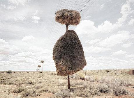 Huge Bird Nests Built On Telephone Poles
