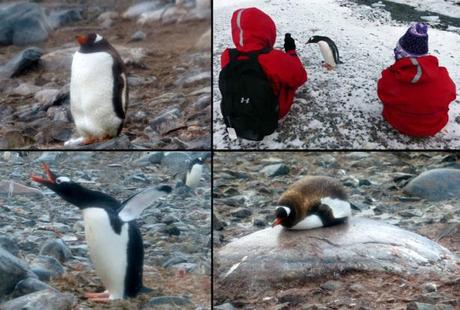 The many faces of penguins_MS