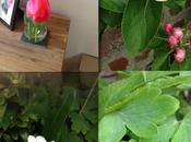 Blossom, Blooms Buckets Slugs