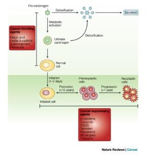 cancer suppressing phytochemicals diagram