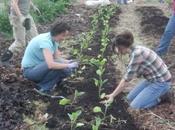 Elves Getting Dirty! Soft Star Volunteers SAGE Community Gardens