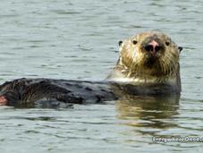 Secret Otter Site