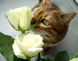 sophie-stop-and-smell-the-roses-BellaPetite