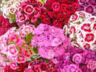 June_Summer_Flowers