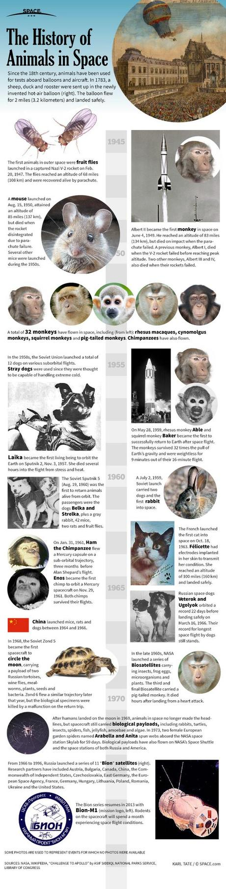 Animals In Space, Then & Now