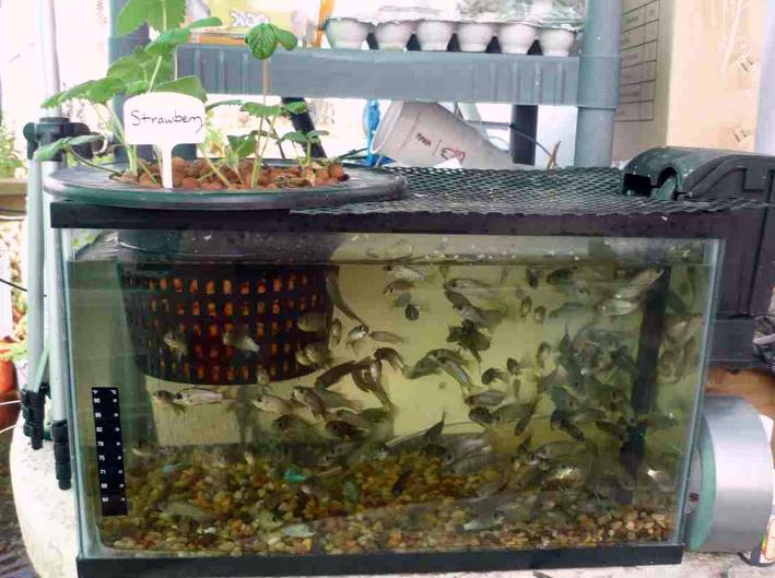 Getting started with Aquaponics system