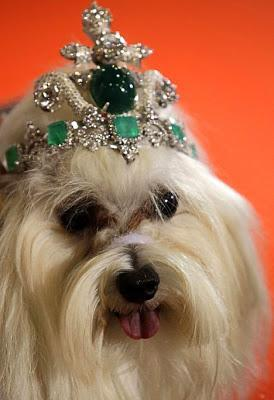 BEHOLD: The Most EXPENSIVE DOG Tiara in the WORLD!