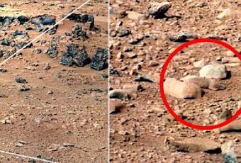 Rat on Mars? - Paperblog