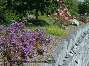 Postcard from Cornwall Rosemoor