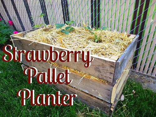 how to make a strawberry planter out of a pallet
