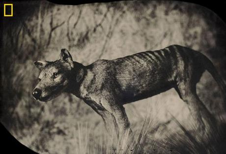 6 Extinct Animals That Could Be Brought Back to Life by LiveScience Staff