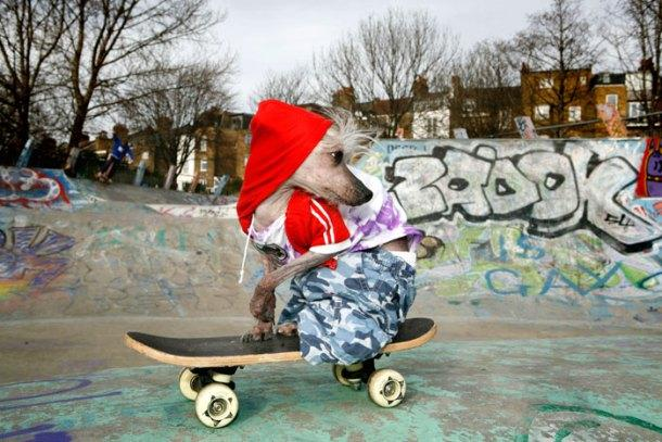 Chini Skate Photo by Irina Werning