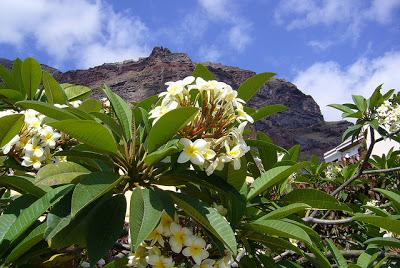 Tips for cruising the Canary Islands