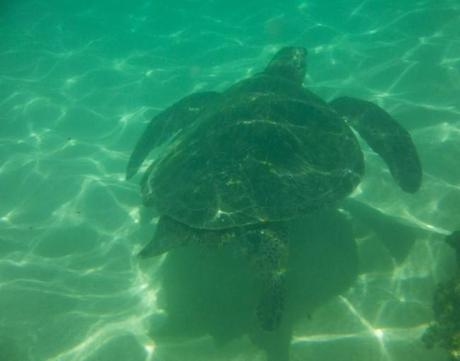 DSCF1039 650x511 Maui: Napili Beach