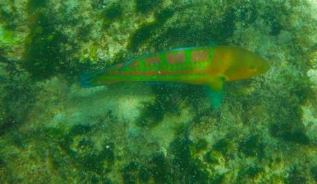 DSCF1032 650x378 Maui: Napili Beach
