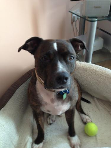 Meet Benson - The Pet Tag