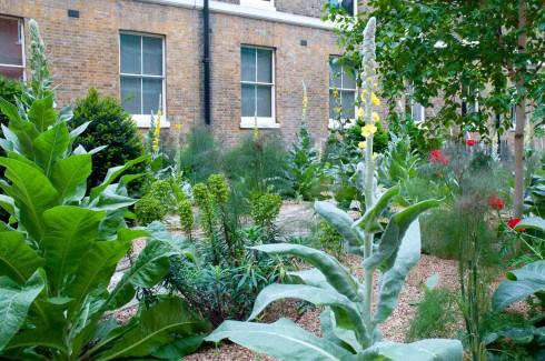 Verbascuum in Hare Court by the Iner Temple, EC4