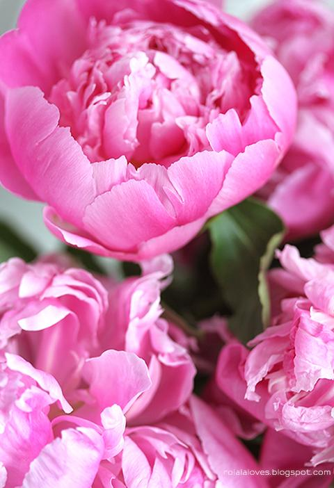 Favorites : Peonies