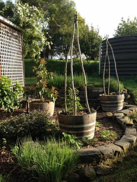 australian town and country 525x700 The Easiest Family Vegetable Garden