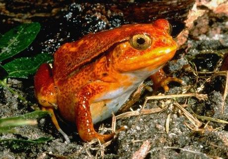 Cute and Colorful Frog Images